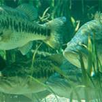MegaStrike's Uhrig: Diving With Bass
